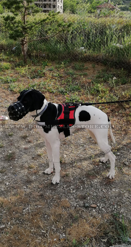 great dane muzzle for sale