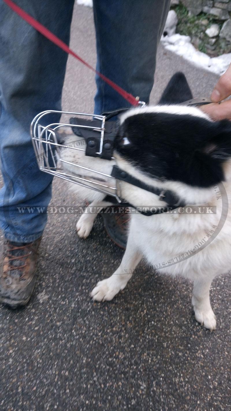 Basket Muzzles for Dogs UK   Best Dog Muzzle - £28.98