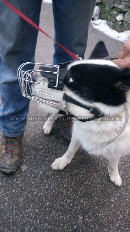 best dog muzzle for Karelian Bear Dog