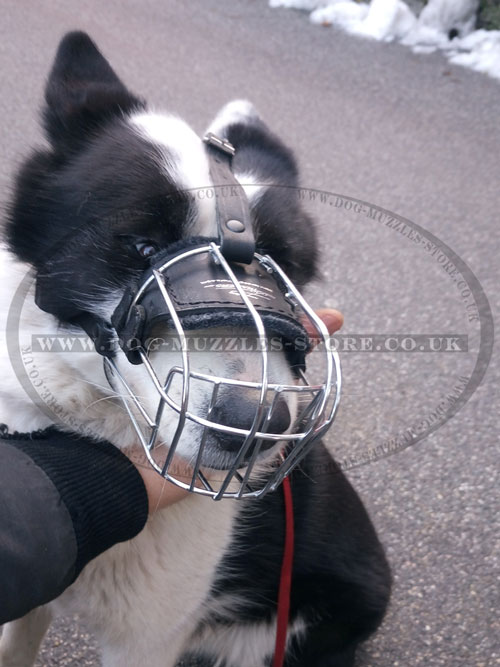buy dog wire muzzle for Karelian Bear Dog online