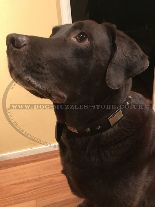 handmade dog collar Artisan buy online for Labrador