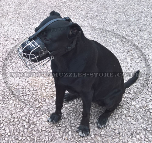 buy no bite muzzle for Labrador online UK