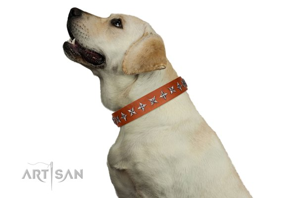 Labrador leather dog collar with stars from Artisan