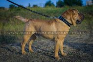 """Mighty King"" Strong Shar Pei Dog Collar With Steel Hardware"