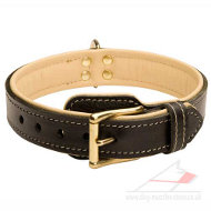 Soft Leather Dog Collar | Luxury Dog Collar | Padded Dog Collar