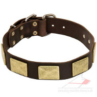Luxury Dog Collar with Square Brass Plates for Large Dog Breeds