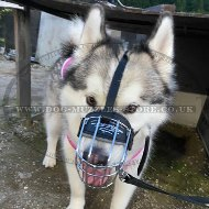 Akita and Husky Dog Wire Basket Muzzle | Husky Muzzles for Sale