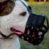 Bestseller!Soft Muzzle for American Bulldog Made of Real Leather
