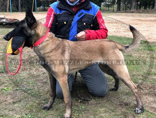 get Training Toy for Malinois for sale