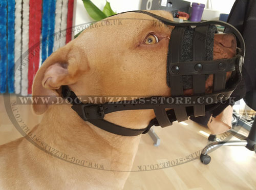 buy breathable dog muzzle for Pitbull online UK
