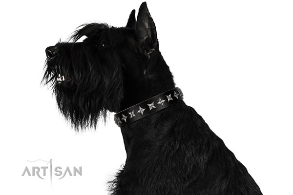 black dog collar with stars for Riesenschnauzer