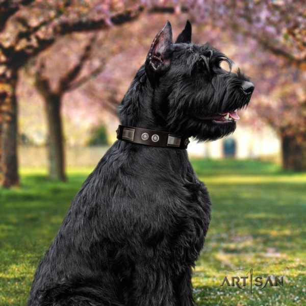 Artisan Dark brown dog collar for Riesenschnauzer