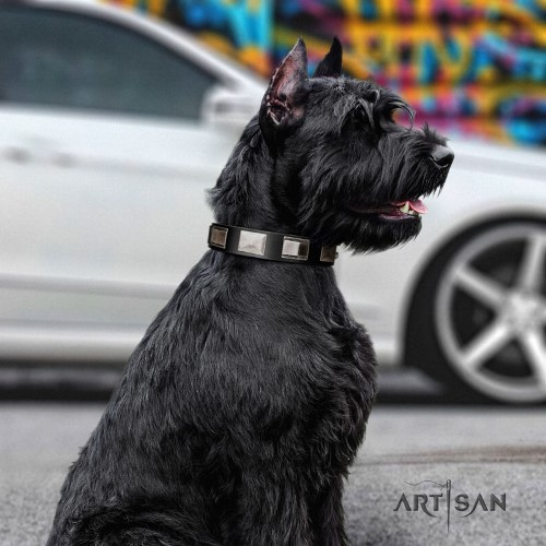 buy soft leather dog collar for Riesenschnauzer Artisan