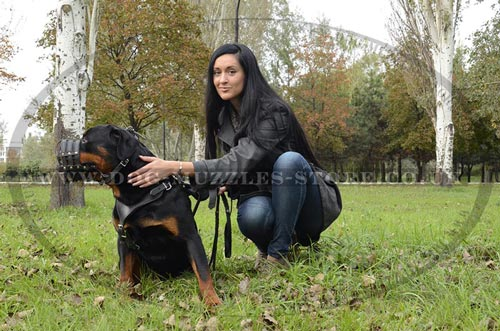 Rottweiler Dog Training