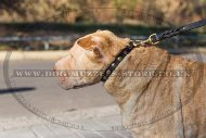 "Durable Studded Shar Pei Dog Collar With Studs 1"" Width"
