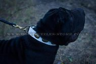 """Vintage Gem"" Adorable White Leather Dog Collar For Shar Pei"