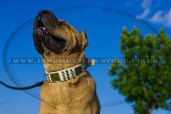 Functional White Leather Dog Collar For Shar Pei With Plates
