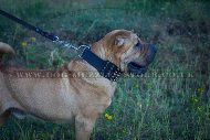 """Heracles"" Extra Durable Studded Shar Pei Dog Collar 2.8 In"