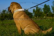 """Clear Sky"" Premium Leather Dog Collar For Shar Pei"