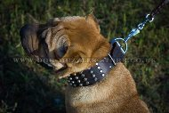 Comfortable Wide Dog Collar For Shar Pei With Pyramids 2.3 In