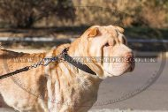"""Reliable Grip"" Strong Nylon Shar Pei Dog Collar"