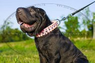 Eye-Catching Shar Pei Dog Collar Adorned With Studs