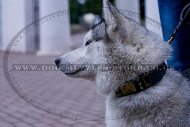 """Noble Sir"" Reliable Studded Dog Collar For Siberian Husky"