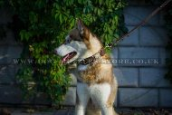 """Empire Of Beauty"" Adorable Leather Collar For Husky With Studs"
