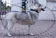 """Necklace"" Best Collar For Siberian Husky With Silver-Like Studs"