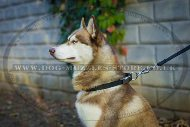 """Reliable Grip"" Tear-Proof Nylon Dog Collar For Husky Daily Walk"