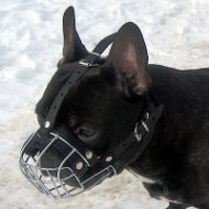 French Bulldog Muzzle UK from the Producer | Small Dog Muzzle