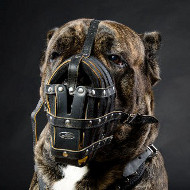 Large Dog Muzzles for Cane Corso | Soft Leather Dog Muzzles UK