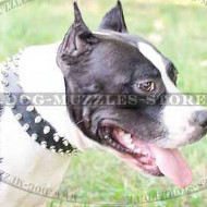 Special Dog Collar for Staffy | Spiked Dog Collar for Amstaff