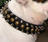 Brass Spiked Dog Leather Collar