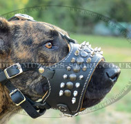 Spiked Dog Leather Muzzle for Great Dane