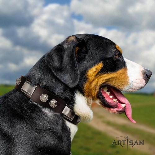 Swiss Mountain Dog studded dog collar