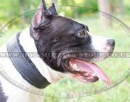 American Staffordshire Terrier Dog Collar | Padded Dog Collar UK