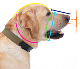 How to measure dog muzzle size