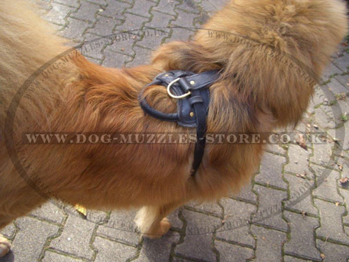 Large Leather Dog Harness with Handle for Tibetian Mastiff