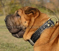 Braided Leather Dog Collar for Shar Pei Dogs Style and Comfort