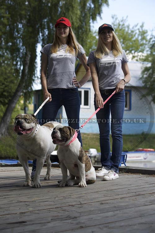 Bulldog walking with a Dog Lead