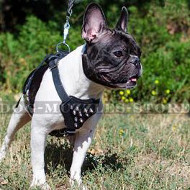 Luxury Spiked Dog Harness for Your Fancy Frenchie