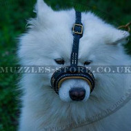 New Leather Dog Muzzle Loop for Samoyed