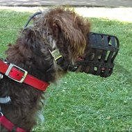 Leather Kindest Dog Muzzle for Poodle UK Bestseller