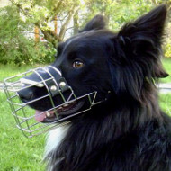 Border Collie Muzzle Shape, Dog Muzzle that Allows Dog to Drink