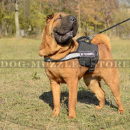High Vis Nylon Dog Harness for Chinese Shar Pei