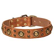Brass Decorated Designer Dog Collar for Big Dogs Style