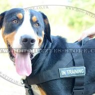 Anti Pulling Dog Harness for Swiss Mountain Dog UK Bestseller!