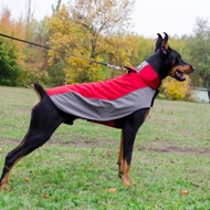 The Best Dog Coat for Doberman Walking in Wet and Cold
