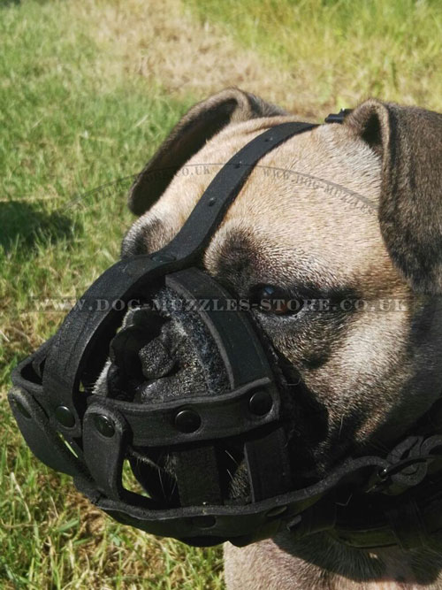 buy french bulldog muzzle online